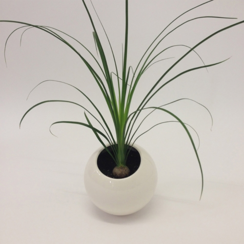 Marre Moerel - Spore planter vase small