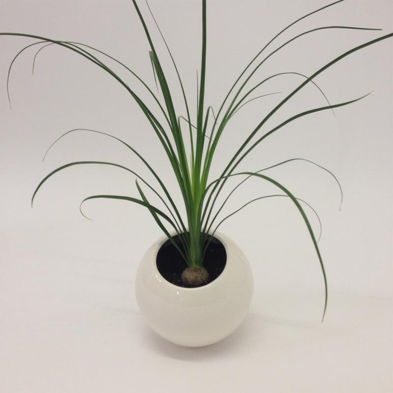 Marre Moerel - Spore planter vase small
