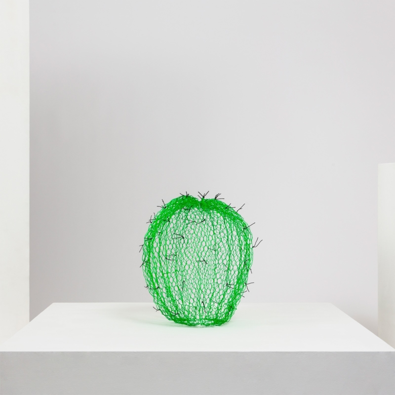 Benedetta Mori Ubaldini - Small green cactus